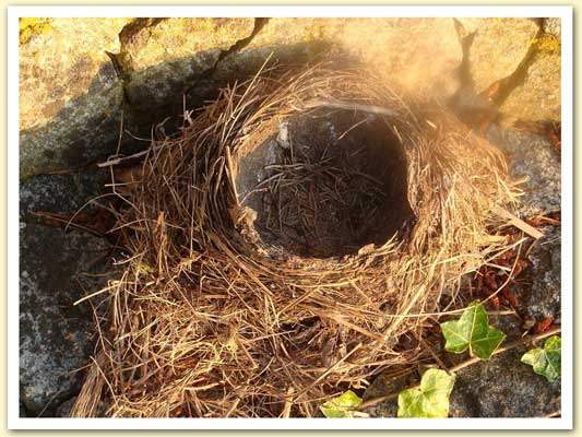 PICTURE OF EMPTY NEST