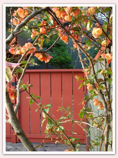 Quince and gateway